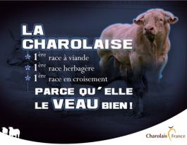 charolais france