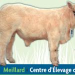 La 39ème Vente aux enchères de Meillard (03), mercredi 20 septembre
