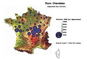 Carte Charolaise année 2000