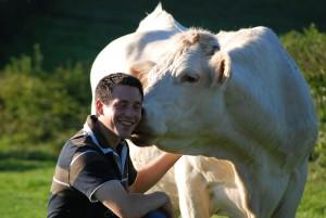 La Charolaise une vache facile à élever