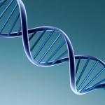 la position du HBC sur la génomique