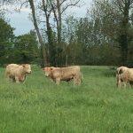 Vitrine à l'Herbe 2016: Découvrez les animaux disponibles à la vente