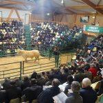 Bilan satisfaisant pour de la 8ème vente aux enchères de la station «taureaux conseillés sur génisses» du Marault » (58)