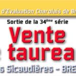Station d'Evaluation de Bressuire (79): La Vente de taureaux se poursuit en direct chez les propriétaires